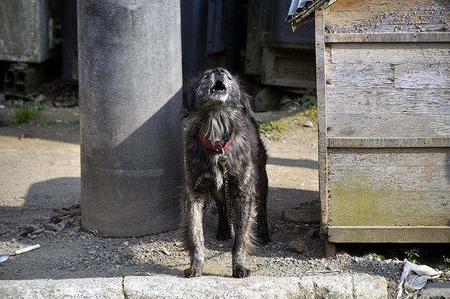 犬鉄.jpg