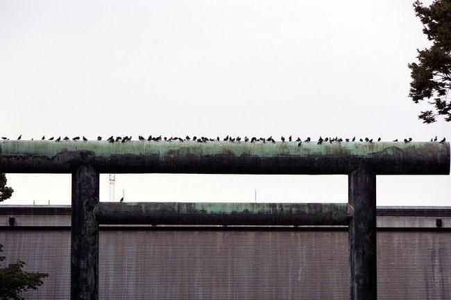 鳥鉄w.jpg