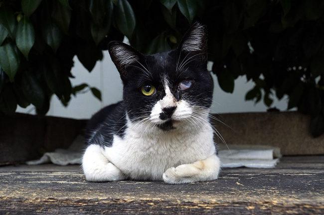 片目猫.jpg